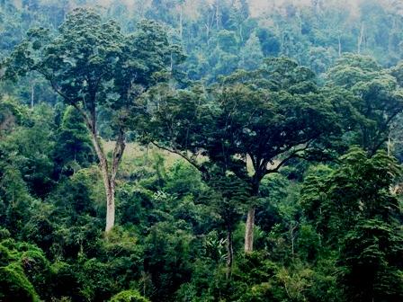 Tàn sát rừng nghiến ở Hà Giang (Kỳ 1)