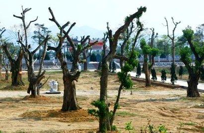 """Huyện Hướng Hóa """"đưa cây rừng về phố""""!"""