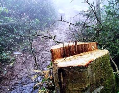 Vén màn vụ phá rừng gây chấn động ở Hà Tĩnh