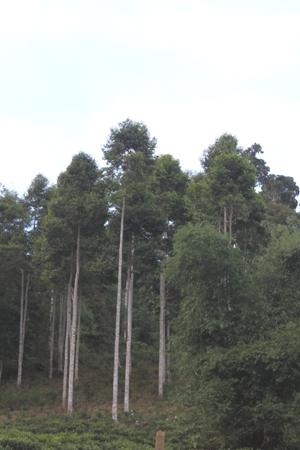 Gia Lai tiến hành rà soát rừng và đất lâm nghiệp