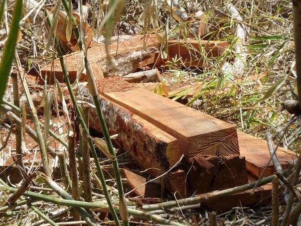 Ngang nhiên phá rừng ở Kông Chro