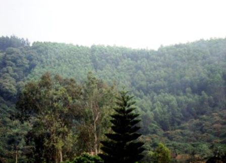 Lục Nam phấn đấu nâng độ che phủ rừng lên 52% vào năm 2015