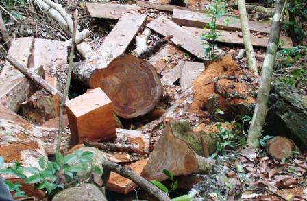 Rừng đặc dụng tại Tuyên Quang bị tàn phá nghiêm trọng