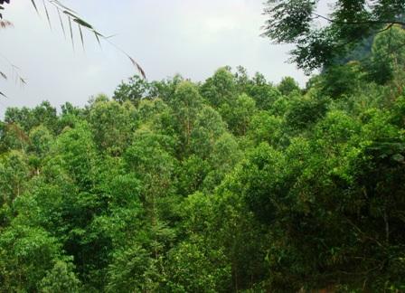 Vận động người dân kéo dài tuổi rừng trồng