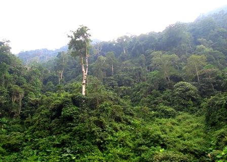 Bình Thuận tăng cường bảo vệ rừng khu vực giáp ranh