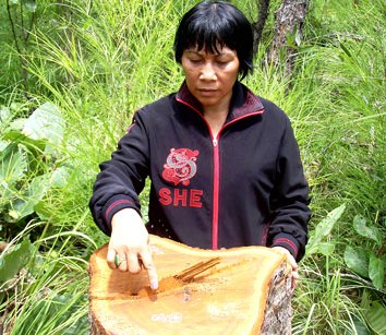 Phó thủ tướng yêu cầu kiểm tra tình trạng phá rừng VQG Yok Đôn