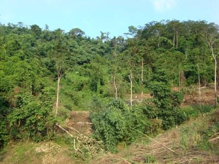 Giải bài toán khó trong đầu tư phát triển rừng đặc dụng