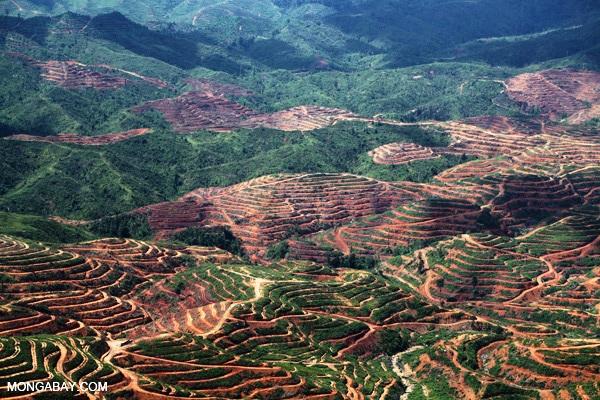 80% rừng mất vì nông nghiệp