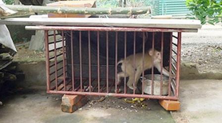 VQG Pù Mát tiếp nhận 26 cá thể khỉ và rùa