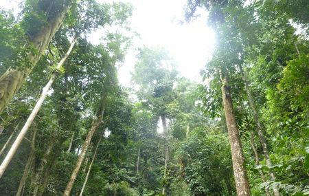 Thương mại đen từ nguồn carbon xanh
