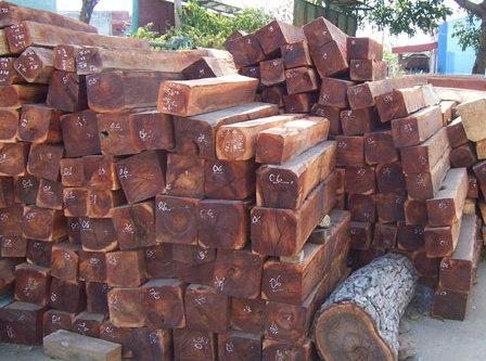 Kiểm tra vụ đốn hạ hơn 51m3 gỗ tại rừng Kông Chro