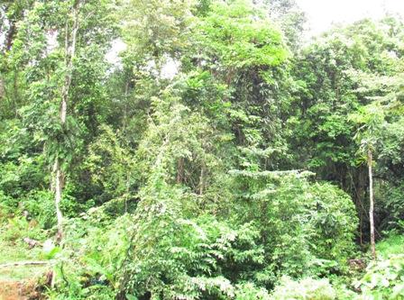 Làm rõ tình hình chặt phá rừng tại đảo Phú Quốc