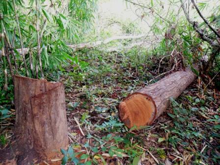 Đắk Nông phấn đấu giảm 50% số vụ phá rừng trong năm 2013