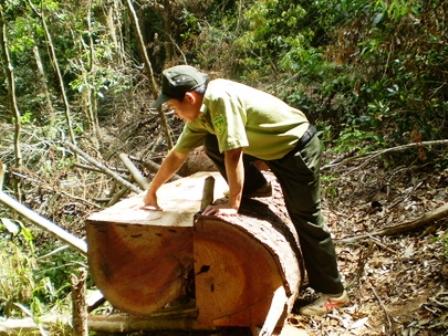 Kon Tum: Hàng trăm vụ phá rừng