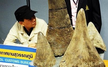 Indonesia bắt nhóm người buôn vẩy tê tê và mỏ loài chim mỏ sừng