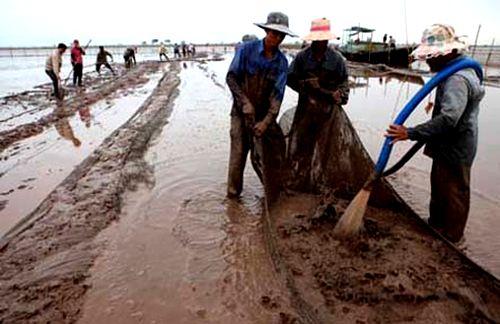 Ngăn chặn nạn phá rừng ở VQG Xuân Thủy