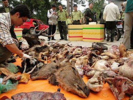 Bệnh viện xin xác động vật hoang dã làm thuốc chữa bệnh