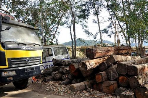 Chấn chỉnh công tác quản lý rừng tại Tây Nguyên