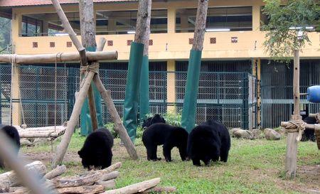 Gấu được nuôi nhốt tại Trung tâm Cứu hộ Gấu Tam Đảo (Ảnh: ThienNhien.Net)