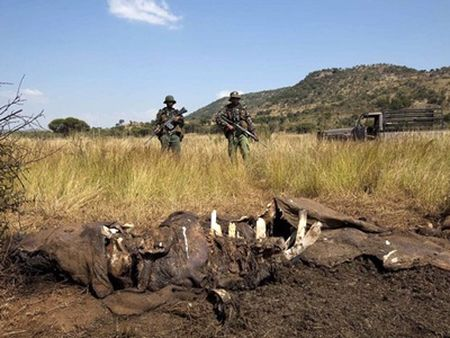 Hai tháng đầu năm 2013, có 150 con bị giết (Ảnh: Reuters)