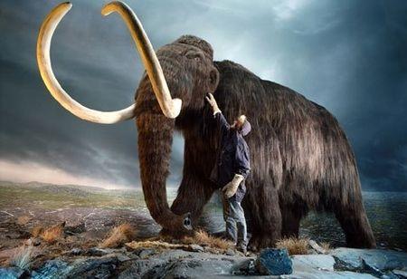 Các nhà khoa học Nga và Hàn Quốc đang tìm cách hồi sinh voi ma mút - loài họ hàng của voi hiện đại đã tuyệt chủng cách đây khoảng 3.000 – 10.000 năm (Ảnh: NatGeo)