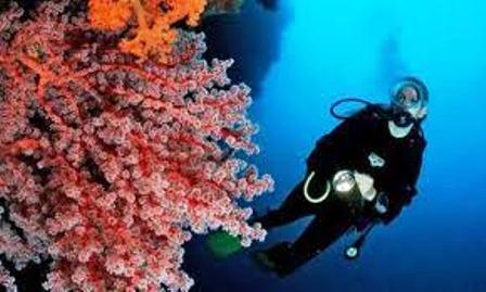 Indonesia nỗ lực phục hồi các rạn san hô tại Bali