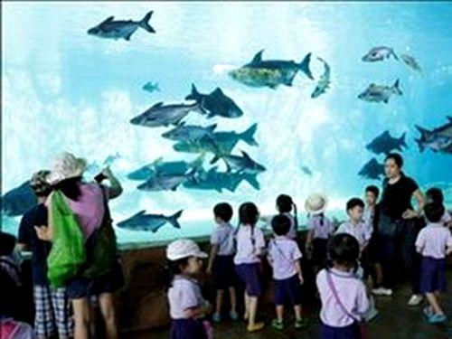Ảnh: Wildlife Reserves Singapore