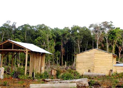 Một khu rừng bị tàn phá để cất nhà chờ đền bù
