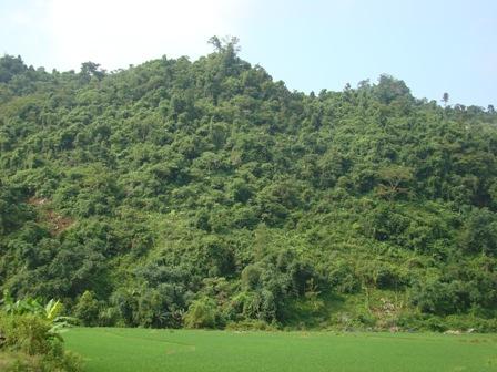 Đất rừng bị xâm hại ở nhiều nơi do người dân thiếu đất sản xuất (Ảnh: ThienNhien.Net)