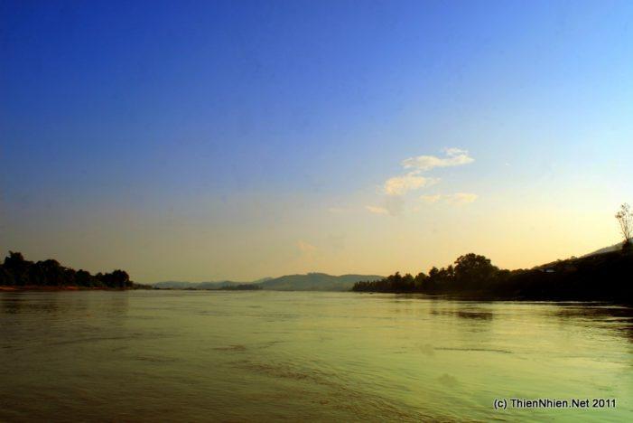 Thủy điện đe dọa loài cá tra dầu sông Mê Kông