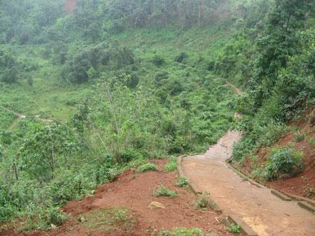 """Rừng hai bên đường vào thác Liêng Nung đã bị """"cạo trọc"""" (Ảnh: Báo Đắk Nông điện tử)"""