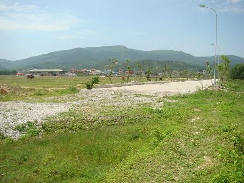 Hàng trăm hec ta đất nông nghiệp mà người dân nhượng lại cho KCN thành nơi chăn thả bò