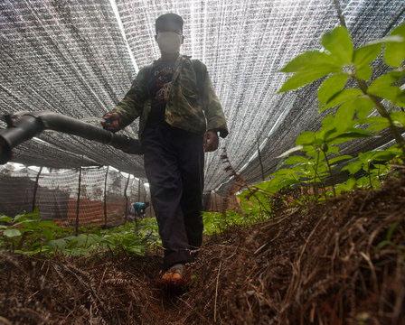 Độc hại thảo dược Trung Quốc