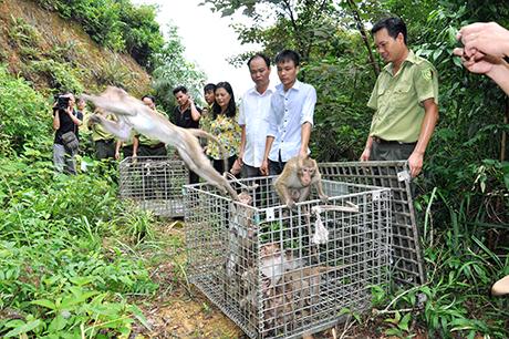 70 con khỉ đã được thả về môi trường tự nhiên trên đảo Ba Mùn (Ảnh: Hữu Việt/baoquangninh.com.vn)