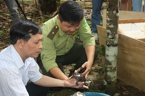 Các cá thể rùa Trung bộ đã có mặt ở Trung tâm bảo tồn rùa Vườn quốc gia Cúc Phương