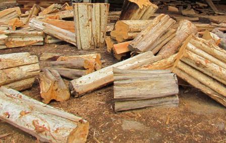 Các tỉnh Tây Nguyên xóa bỏ điểm nóng về khai thác gỗ trái phép