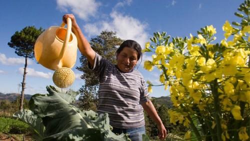 Năm 2050, sản lượng cây trồng phải tăng từ 60 - 100% mới đủ đáp ứng nhu cầu (Ảnh: Oxfam)