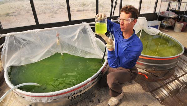 Các nước đang phát triển chưa đủ điều kiện nghiên cứu NLSH từ tảo