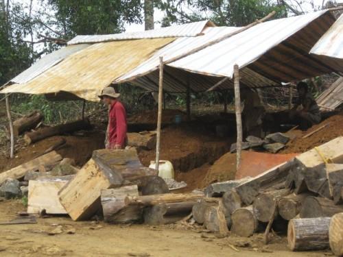 Gỗ được xẻ làm củi đốt, sấy măng ngay bên cánh rừng bị khai thác. (Ảnh: Hùng Võ/Vietnam+)