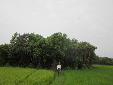 Rừng Nà bên những đồng lúa (Ảnh: Nông thôn Ngày nay)