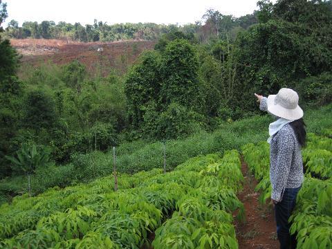 Đất rừng dự án trồng cao su... mênh mông! (Ảnh: Nông nghiệp Việt Nam)