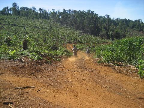 Con đường dẫn vào đất rừng trồng cao su ở huyện Đạ Huoai (Ảnh: Nông nghiệp Việt Nam)