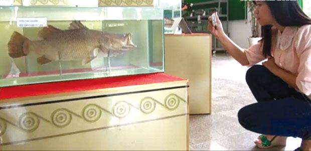 Bảo tàng thuỷ sản: cá sông còn một chút này…