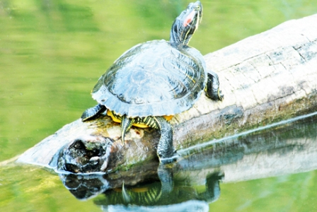 Lúng túng việc ngăn chặn sinh vật ngoại lai xâm hại