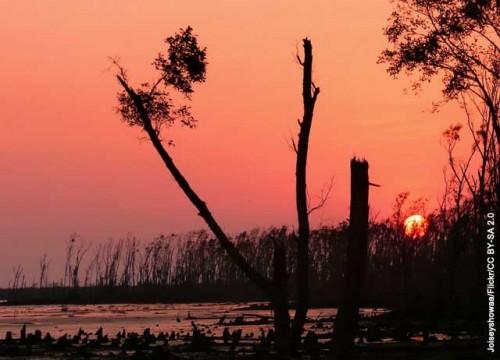 Rừng ngập mặn đang biến mất nhanh chóng với tốc độ trung bình khoảng 1%/năm