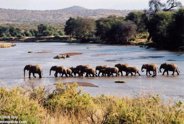 Mỹ tiêu hủy 6 tấn ngà voi