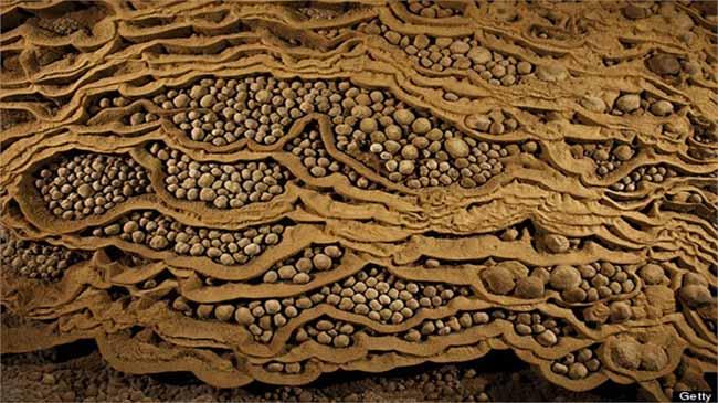 Nhũ đá đặc sắc bên trong Sơn Đoòng