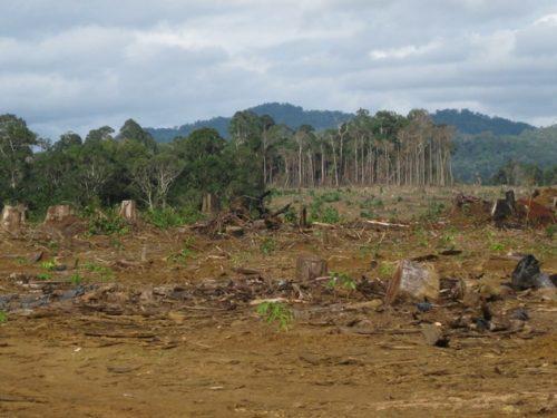 Phá rừng chuyển đổi đất trồng cao su ở Lâm Đồng. (Ảnh: Hùng Võ/Vietnam+)