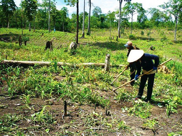 Lấn chiếm trái phép 9.680 ha rừng, đất rừng tại Đăk Lăk