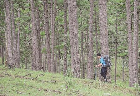 """""""Kẻ độc hành chốn rừng xanh"""""""